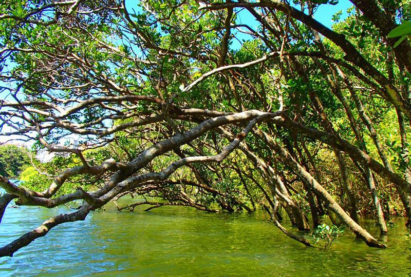 Mangrove Kayak Tour