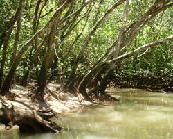 マングローブには様々な生物が生息しています