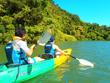 マングローブ林を冒険しよう